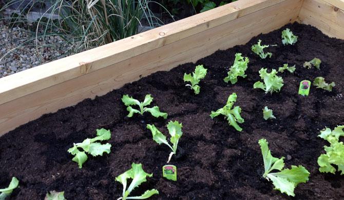 anlegen und bepflanzen