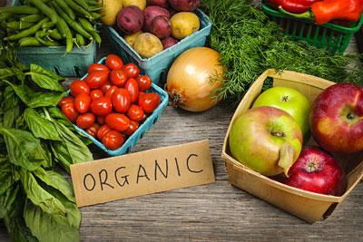 bio gemüse anbauen