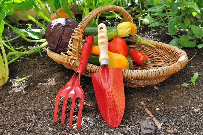 gemüse anpflanzen