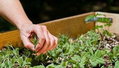 hochbeet-bepflanzen